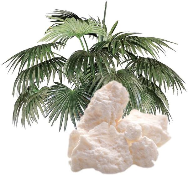 palm-oil 1