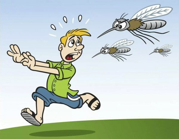 комар 11