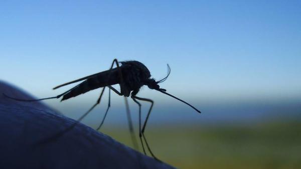 комар 7