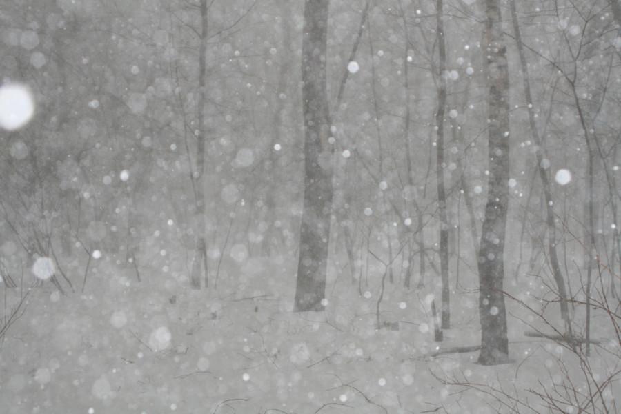 снег 309