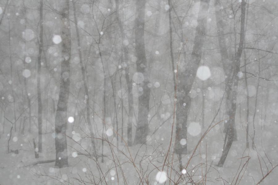 снег 312