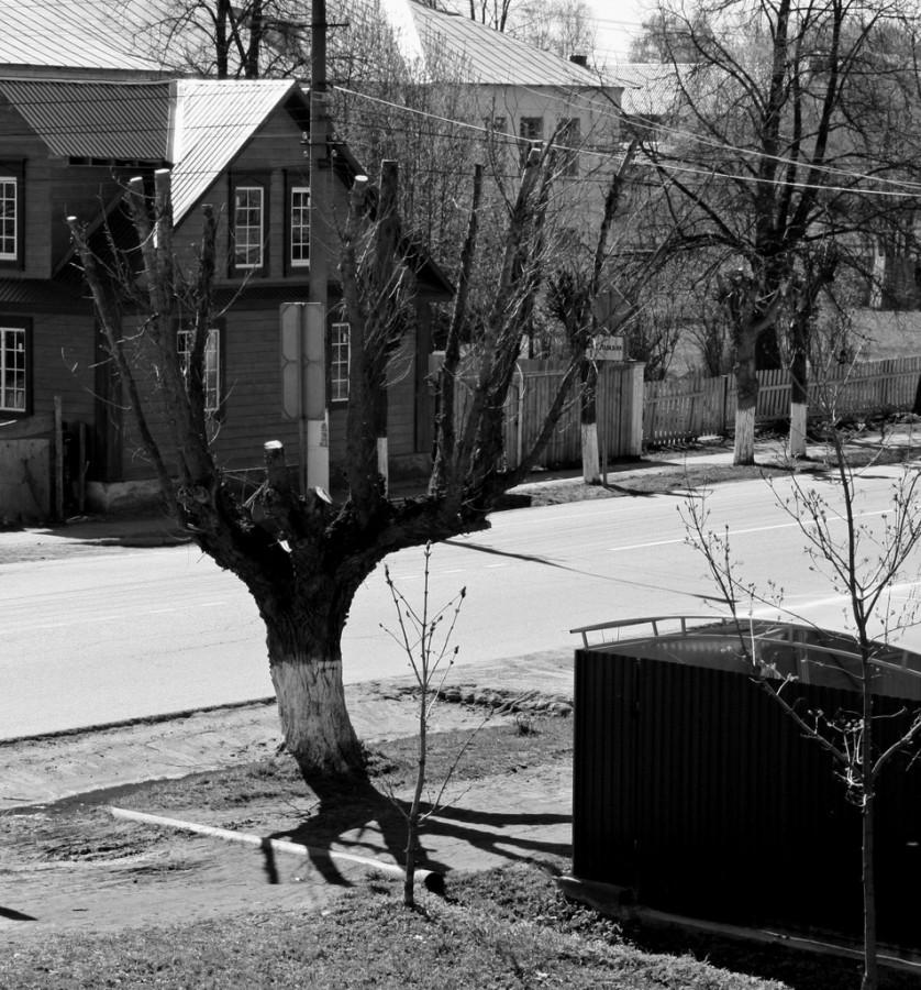 Дерево ч.б.