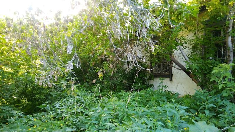 заросли крапивы и клена ясенелистного