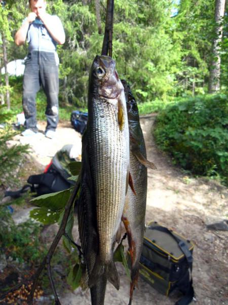 ловля рыбы хариус