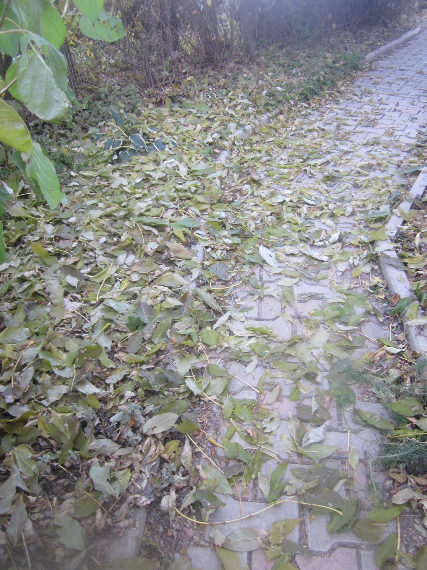 Листья усыпали всю дорожку