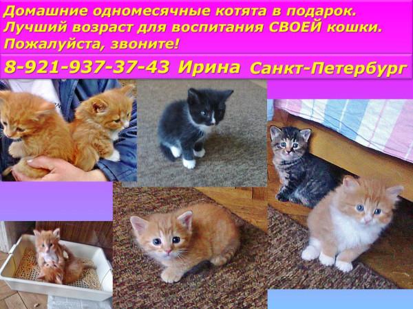 Санкт-Петербург! Очаровательные котята в добрые руки! Тося, Рокоссовский и еще несколько котят!