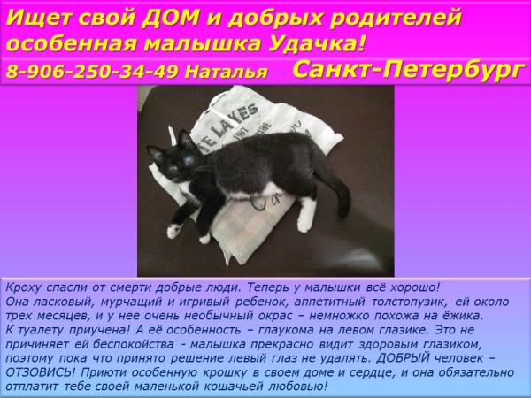 Санкт-Петербург! Ищет свой дом и добрых родителей особенная малышка Удачка!