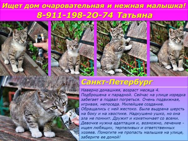 Санкт-Петербург! Ищет дом очаровательная и очень милая малышка!