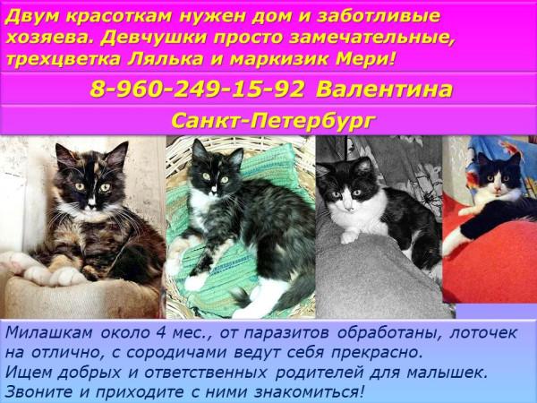Санкт-Петербург!Двум красотка:м трехцветной Ляльке и маркизику Мери нужен дом и заботливые хозяева!
