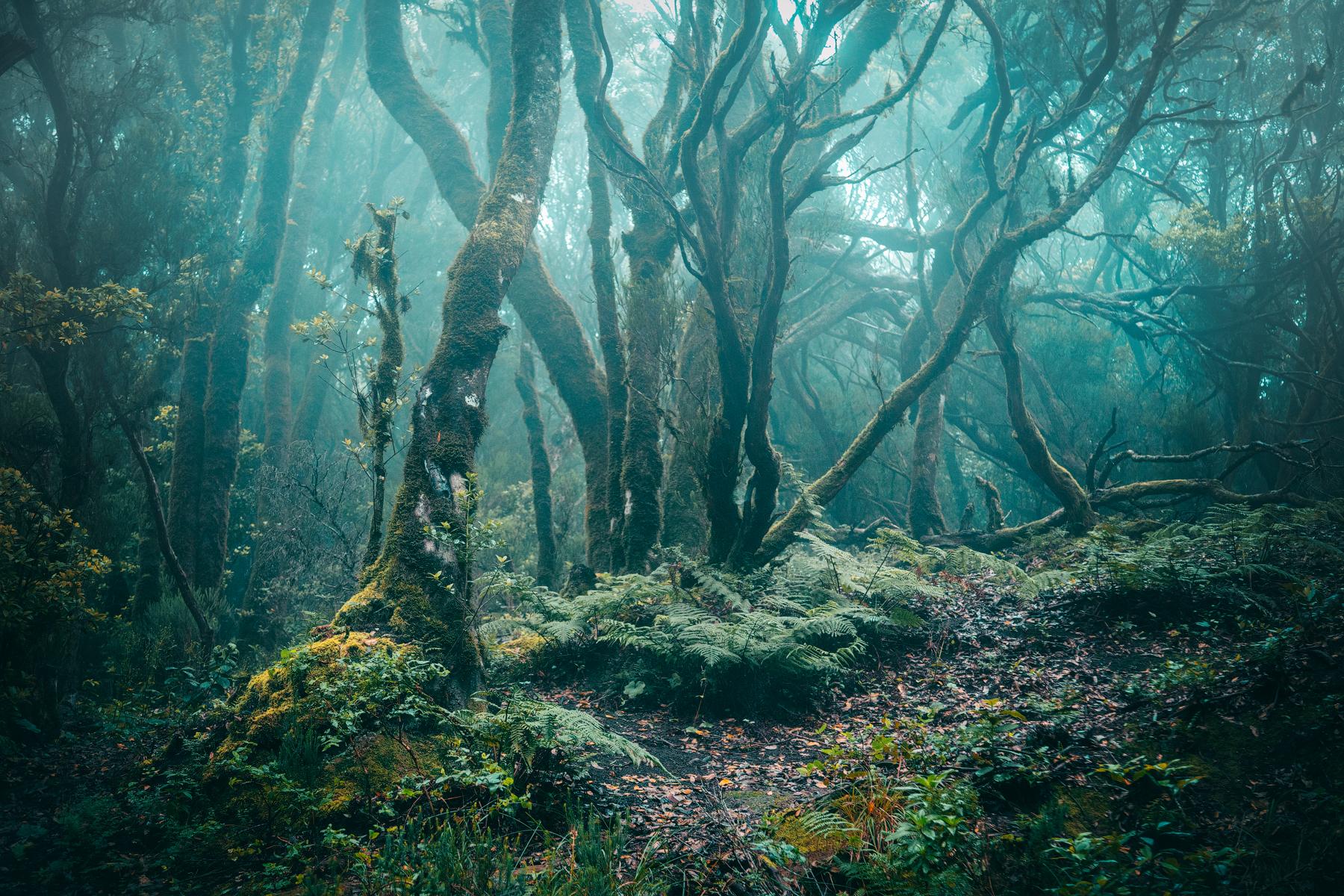 Леса парка Анага