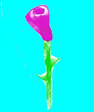 flower  drawn november 28 2012 using chrome harmony application