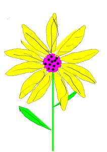 Sunflower drawing September 6 2013
