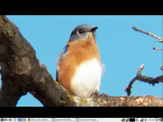 bluebird fedora screenshot on desktop september 29 2013