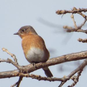 bluebird murphy city park 1 31 14