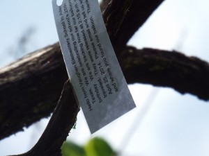 note in the tree about the balloon
