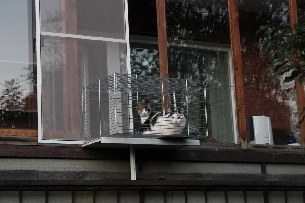 Кошки в клетке.