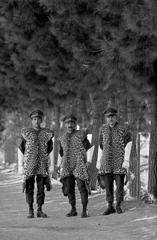 Персидские котики.