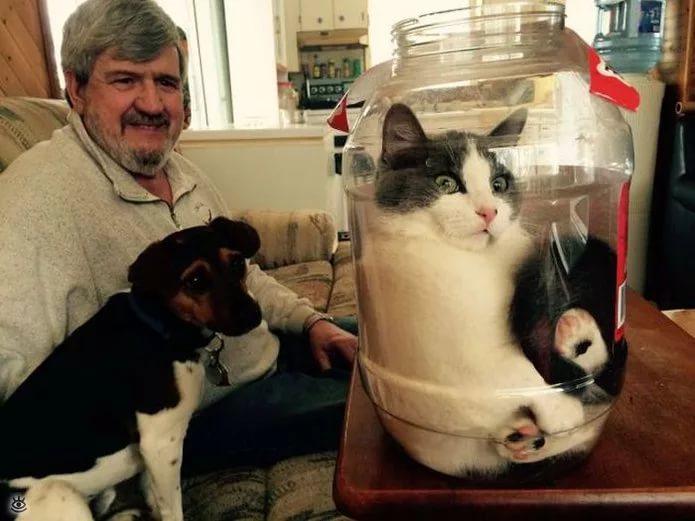А котики, котики, котики, котики со мной.