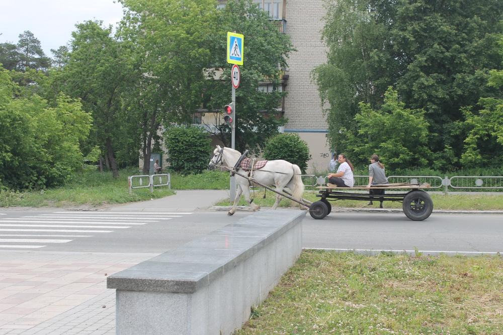 Белая лошадь. лошадь, улицах, территории, лошади, можно, помахивает, хвостом, Теперь, времена, минули, безвозвратно, нашего, города, Когдато, встретить, очень, коричневая, Причём, встречаются, верховые