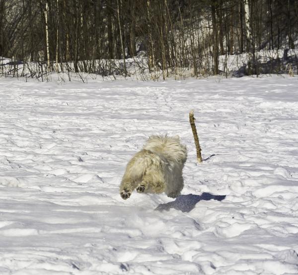 собака в воздухе