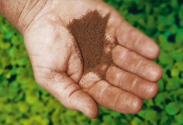 Как правильно сеять семена курительного табака на рассаду 52