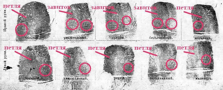 Образец Бланка Для Отпечатков Пальцев