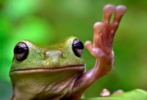 Лягушка-патриот.jpg