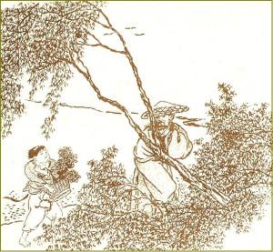 Поэт Тао Юаньмин собирает хризантемы