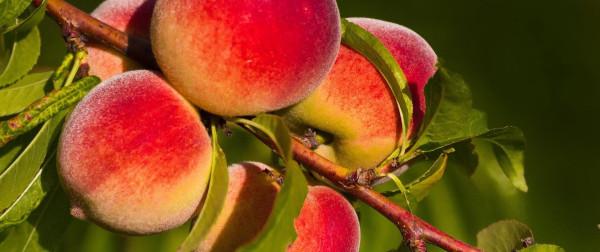 Персики!