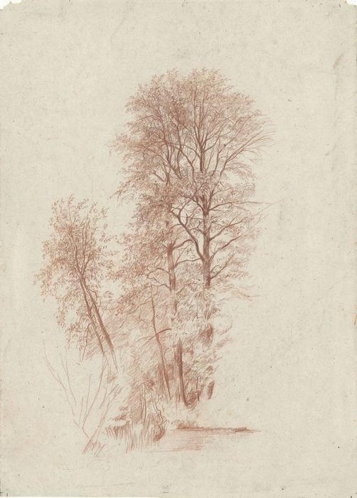 Studie van twee slanke en enige kleinere bomen in blad 2778