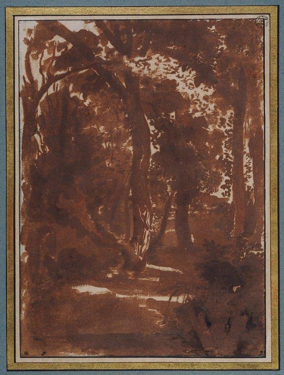 Paysage chemin dans une forêt