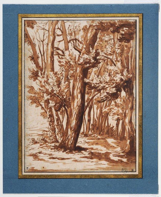 Paysage  arbres à demi morts en bordure d'un bosquet