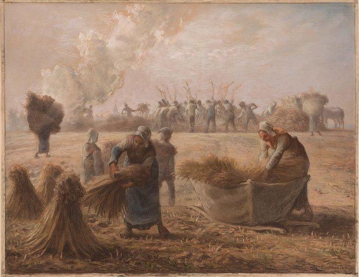 Buckwheat Harvest 68-701