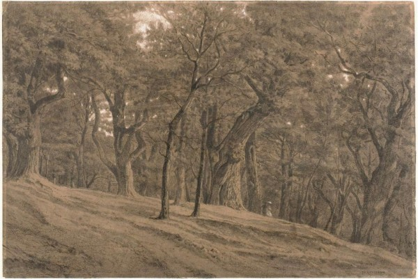 In the Forest of Fontainbleau, c. 1850  Charcoal, with stumping and black pastel white chalk on wove paper 285 x 424 mm The Art Institute of Chicago.…