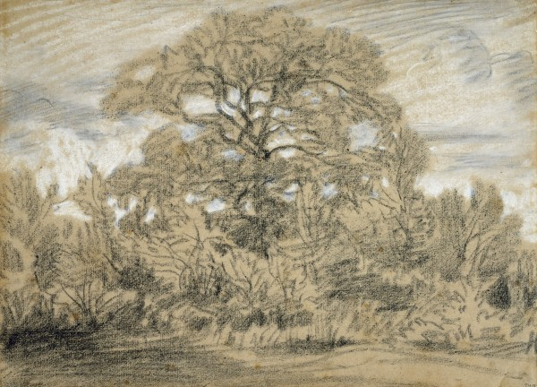 Study of an Oak Tree c. 1862 Black And White Chalk On Laid Paper 27.3 x 37.3 cm Museum of Fine Arts, Houston.jpg