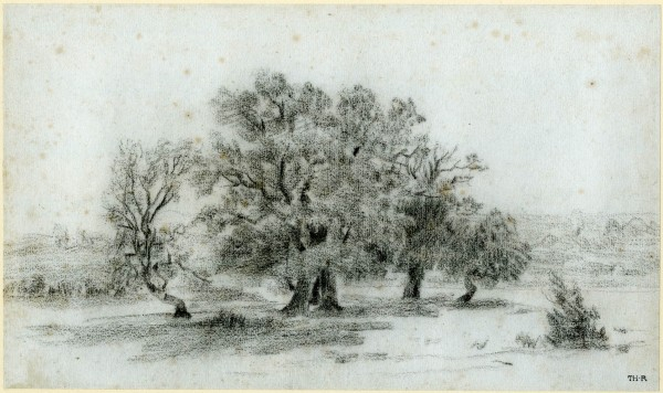 A clump of trees in a field, study for the painting 'Oak Trees at Apremont, Fontainebleau' Black chalk 1827-1855 16,9x28,4 cm bm.jpg
