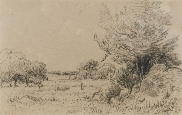 BEAUTIFUL MARIE'S APPLE TREES Pierre noire sur papier 12.5 x 20.3 cm.jpg