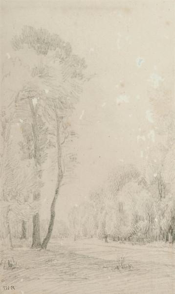 Chemin boisé Crayon noir 21 x 12,5 cm pc.jpg