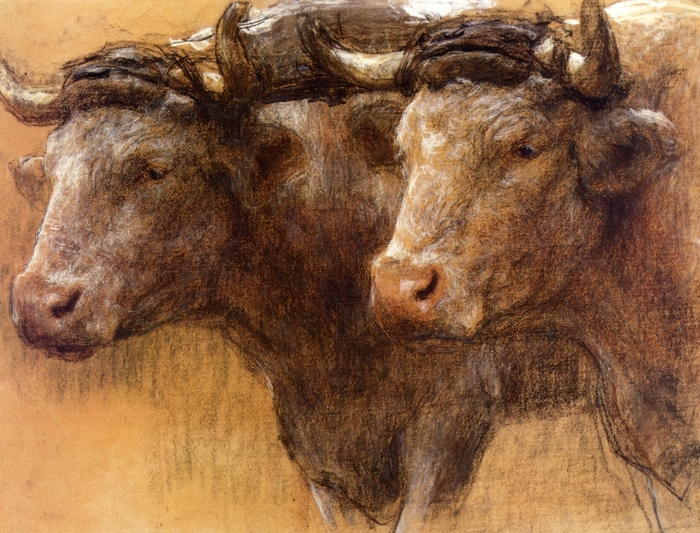 Heads of Two Oxen, Study for 'La Famille'1