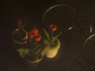Миниатюрка тюльпаны.