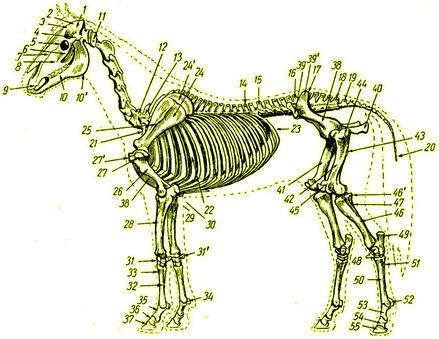 лошадь2