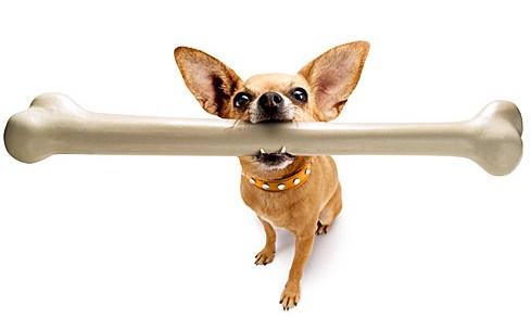 1278415082_dog-bone-feeding