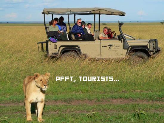 59499-safari copy