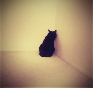фото-котэ-отчаяние-одиночество-801816
