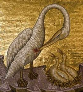 pelikana