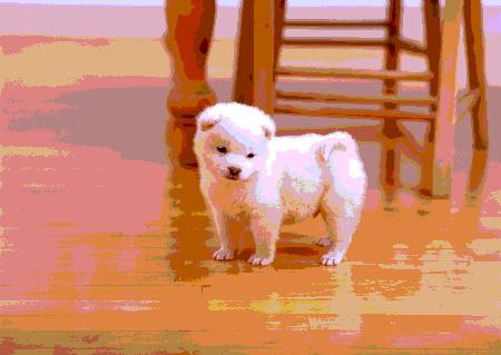 щенок-белой-акиты