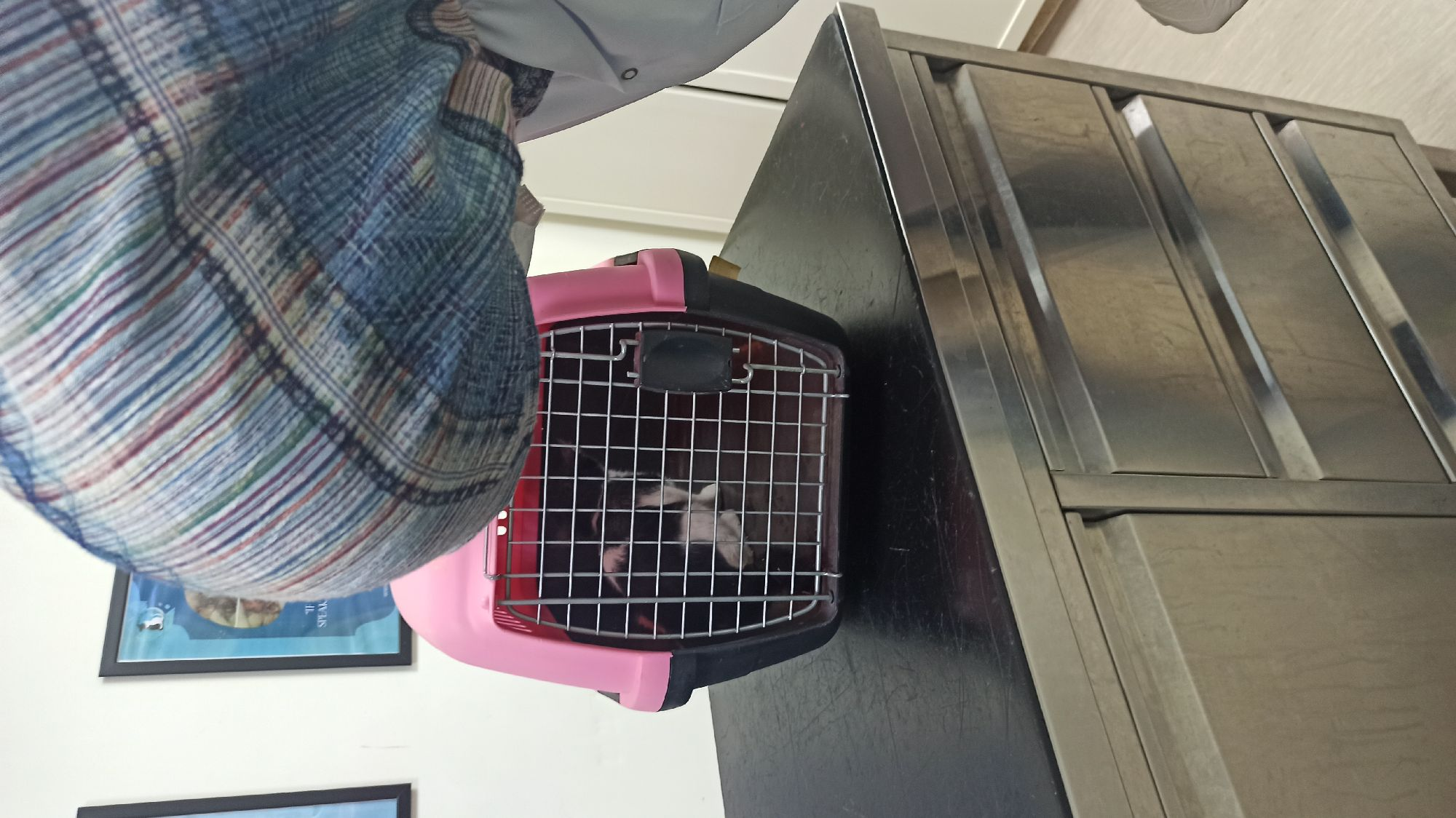 Прощание с котяком, которого я назвала Сахара, по имени Молла, в котором его нашла.