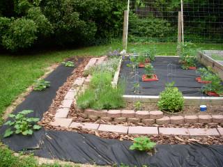 Garden update, 5/29/2008