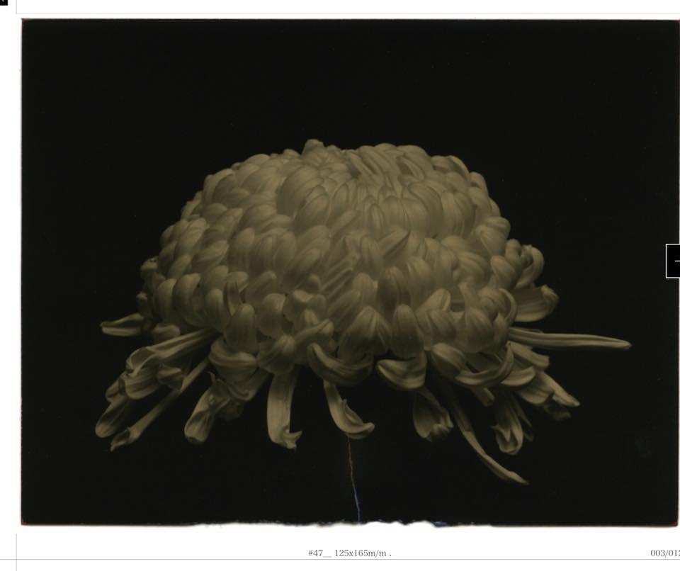 Фотограф часто обрывает концы своих работ,  подкрашивает неровные кончики цветными карандашами - получается, это уже не просто фотография, а арт-объект