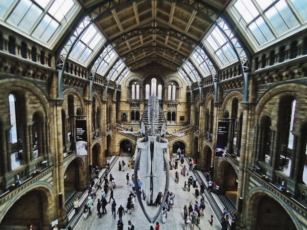 Музей естествознания, вход бесплатный
